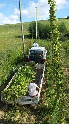 brasserie-dulion-houblon-bio-biere-lyon-2